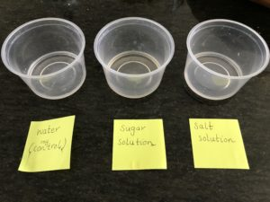 Evaporation experiment